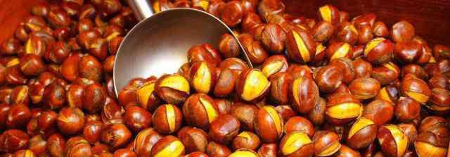 中国最好的板栗品种 板栗在南方可以种植吗 在南方适合的品种有哪些