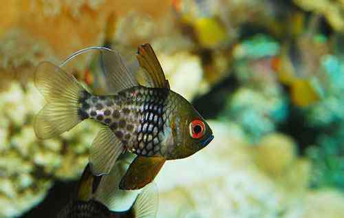 养金鱼的方法 【养鱼禁忌】新手养鱼和安放鱼缸的方式