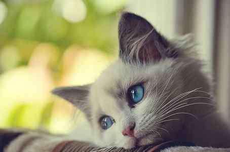 猫病 猫奴必看|猫猫生病的10大症状