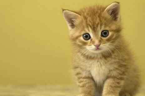 呕吐的原因有哪些 猫咪呕吐的原因有哪些?