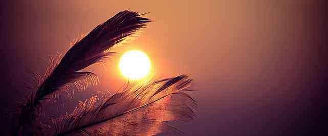 什么的羽毛 什么东西可以代替羽毛 代替羽毛的东西