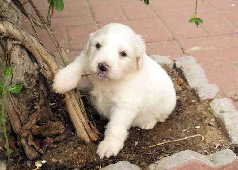 狗狗护食怎么办 狗狗特别护食怎么办?纠正狗狗的护食妙招