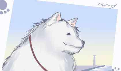 巴扎黑是什么狗 狗名大全霸气 狼狗公的叫什么名字好