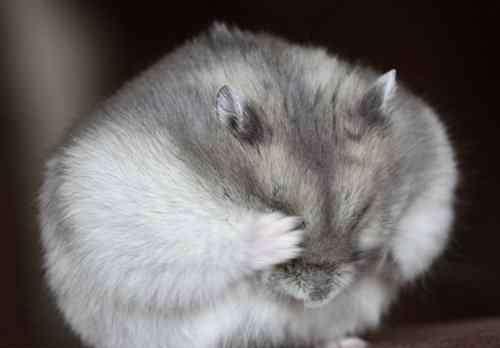 仓鼠咬笼子是什么原因 仓鼠咬笼子的原因以及如何选择合适的笼子?