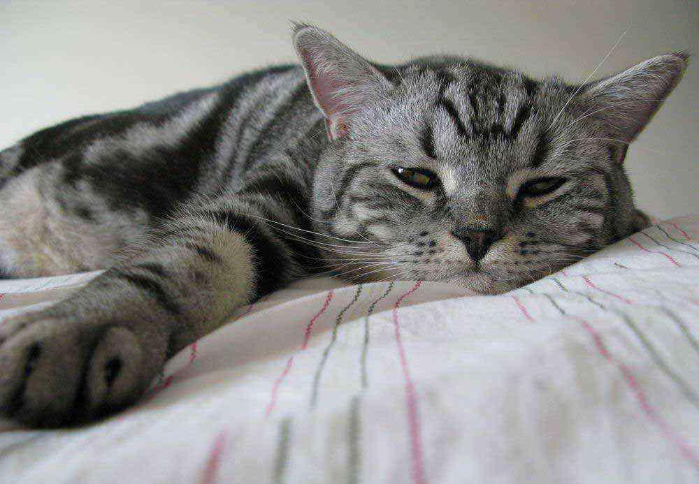 快速睡着的小妙招 快速睡着小妙招 具体应该怎么做