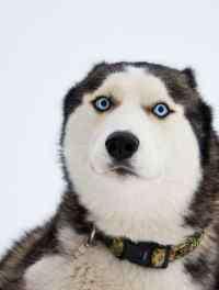 狗狗疫苗多久打一次 要打哪些疫苗,狗狗要隔多久打一次疫苗