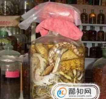 毒蛇泡酒 毒蛇泡酒,一般泡多久蛇才会死?