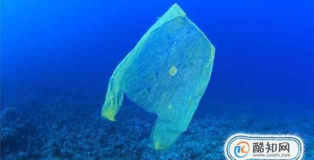 海洋生物有哪些 垃圾对海洋生物有哪些影响