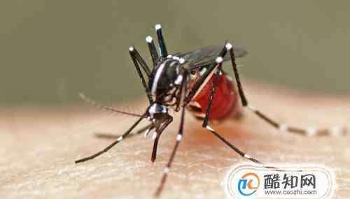 防蚊植物 什么植物可以驱蚊