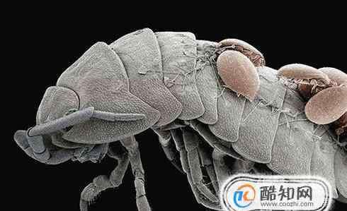 螨虫的危害 螨虫有什么危害?如何预防螨虫?