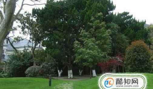 园林植物配置 园林景观植物配置------北方常见树种