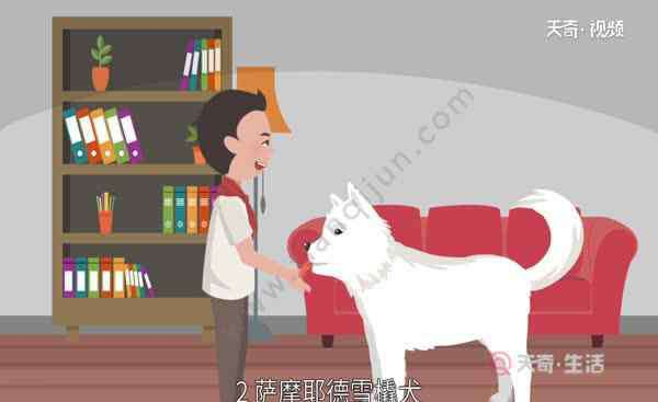 雪橇犬有几种 雪橇犬有几种 雪橇犬有哪些品种的狗