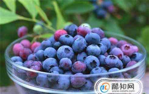 蓝莓怎么吃 新鲜蓝莓怎么吃才好
