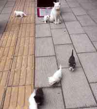 宠物寄养多少钱 给猫咪放在宠物店里寄养有什么注意事项,猫咪在宠物店寄