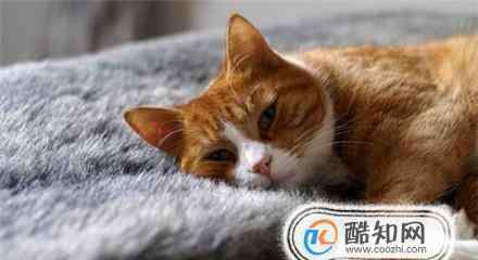 猫咪拉肚子 小猫拉稀像一滩水,猫咪拉水便怎么办