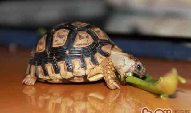 肺病的种类 陆龟肺炎的种类及治疗