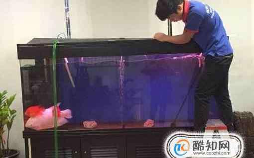 大型鱼缸 如何清洗家里的大型鱼缸并换水