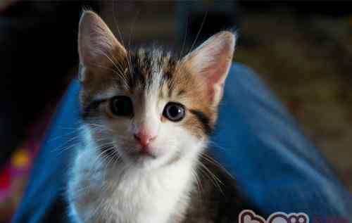 怎么抱猫 如何正确的抱猫咪