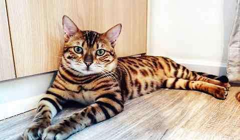 猫鼻支的早期症状 猫咪得了猫鼻支会死吗?
