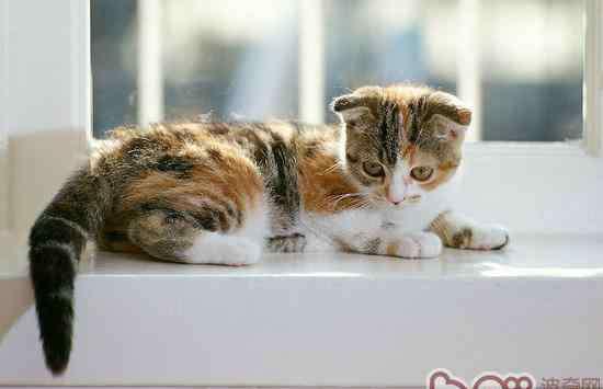 葡萄膜炎是什么原因引起的 关于猫咪葡萄膜炎的原因及治疗