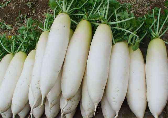生吃白萝卜的功效与作用 白萝卜有什么营养价值?什么人千万不能吃白萝卜?