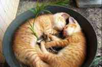 猫能吃蛋糕吗 猫咪吃了蛋糕怎么办,猫咪可以吃奶油蛋糕么