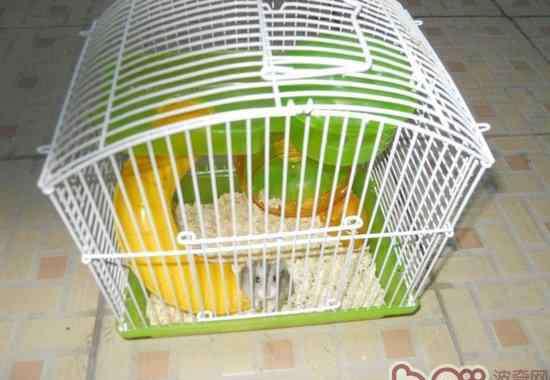 仓鼠笼子 如何选购合适的仓鼠笼子