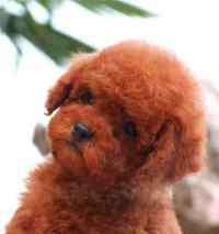 头七狗狗回家大概几点 狗狗为什么死了睁着眼睛,狗狗死的时候为什么睁着眼睛