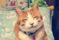 什么猫适合新手女生养 十大比较好养的猫,哪种猫既便宜又可爱还好养