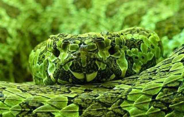 世界上最大的蛇 中国最大的蛇有多大?世界上最大的蛇有55米,是真的吗?