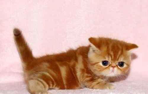 皮肤湿疹的症状 猫咪得湿疹的原因及相应症状