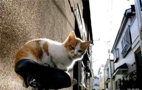 对猫过敏怎么办 对猫猫过敏怎么办