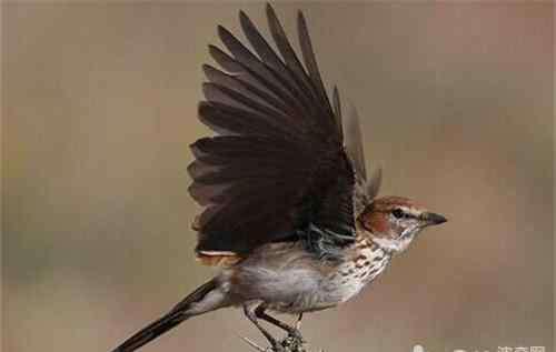 养虎皮鹦鹉对人的危害 鸟类与人同居有哪些危害?