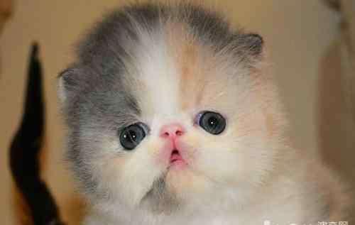 神经性皮炎症状图 猫神经性皮炎的症状有哪些