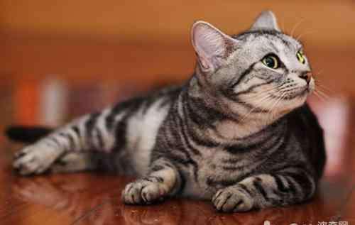 如何预防传染病 如何预防及控制猫白血病