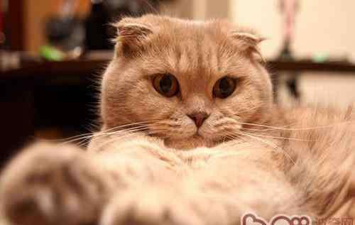 猫睡觉打呼噜 猫咪打呼噜可能是病