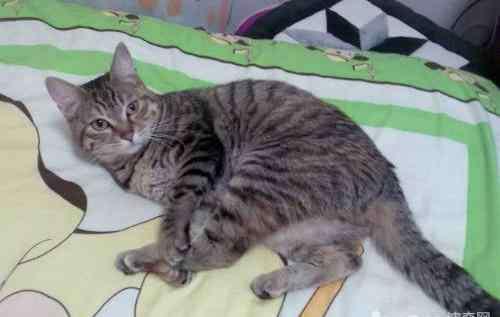 猫咪口炎初期症状 猫咪口炎的诊断与症状