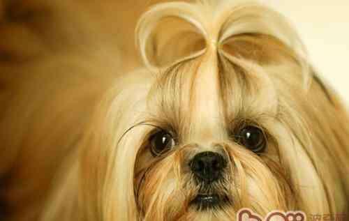 名犬大全 中国的名犬有哪些