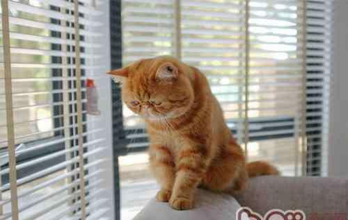常见病因 猫咪常见疾病的病因和治疗方法