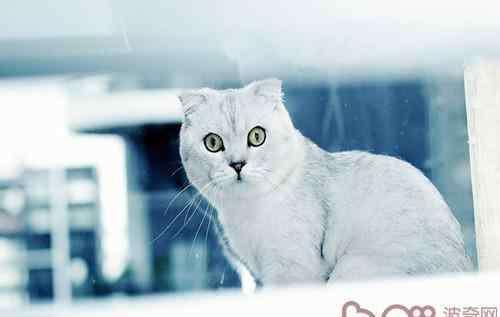 传染病的传播途径有哪些 猫瘟的传染途径有哪些