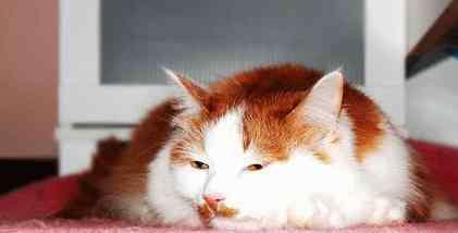 自制猫窝 自制环保猫窝之纸质猫窝