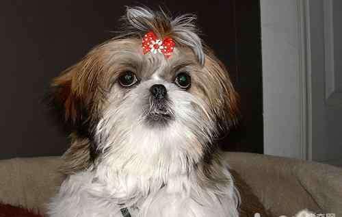 什么导致前列腺炎 前列腺炎会引起狗狗哪些症状