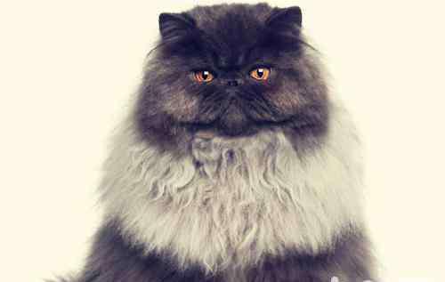 维生素b缺乏症的主要表现 猫咪维生素缺乏症的表现