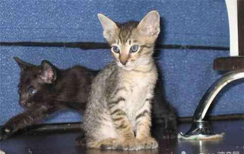 维生素b6食物 猫维生素B6缺乏症的防治措施