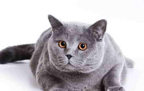 皮肤病的症状有哪些 猫真菌性皮肤病有哪些症状
