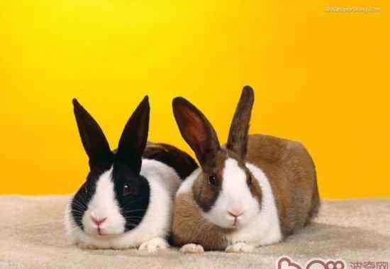 兔子几个月可以繁殖 五种情况下兔兔不宜繁殖