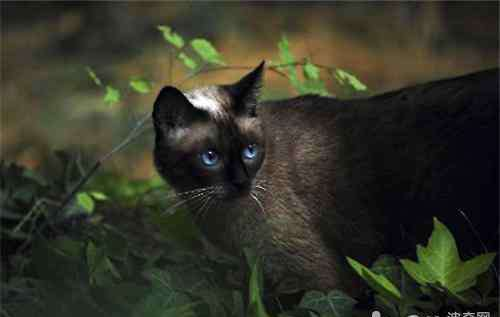 很凶的猫叫声 半夜猫叫为什么那么恐怖?