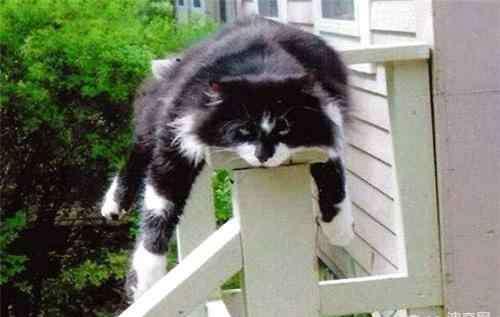 母猫什么时候绝育最好 猫咪什么时候绝育最好?