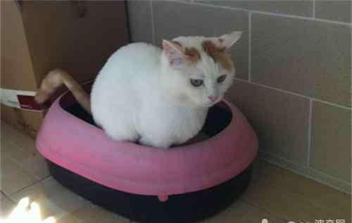 猫不拉屎的原因是什么 猫咪排泄不通畅及用力是一种病