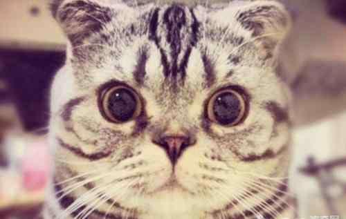 病毒性感染的症状 猫病毒性上呼吸道感染的症状有哪些